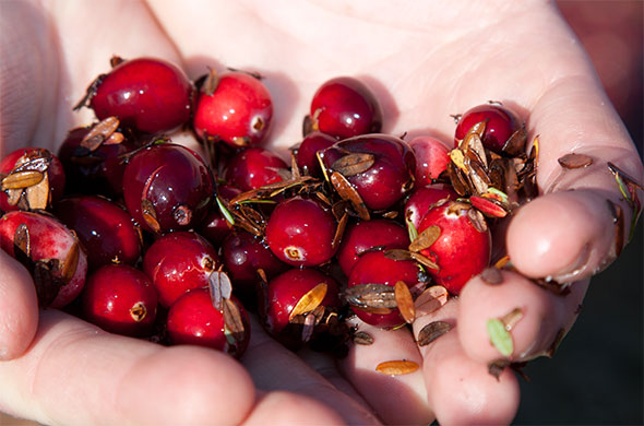 Cranberries in hand